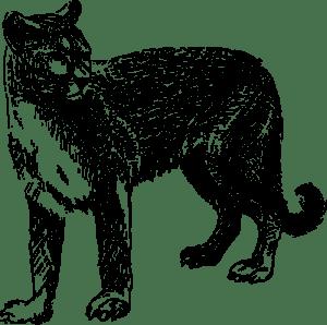 Cougar-
