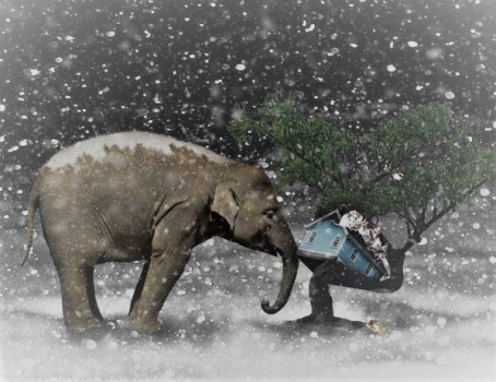 elephant-2910293_960_720-4