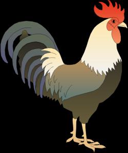 ayam-jantan